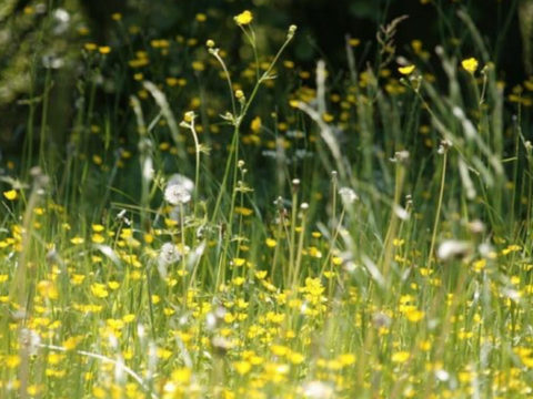 5 tips to beat Hayfever